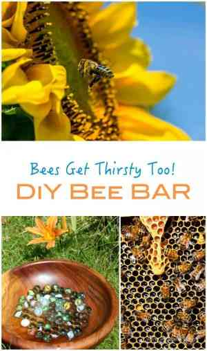 Did you know that Bees need to drink water - and many drown. Here is an idea for your own garden to encourage - and help bees!