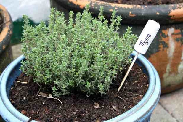 Thyme Cork Herb Marker. So easy to make and a great addition to any herb potted gift