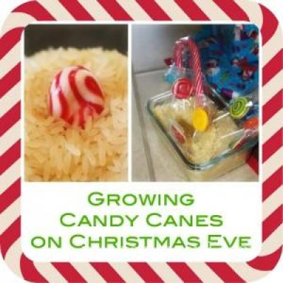 Growing Candy Canes on Christmas Eve