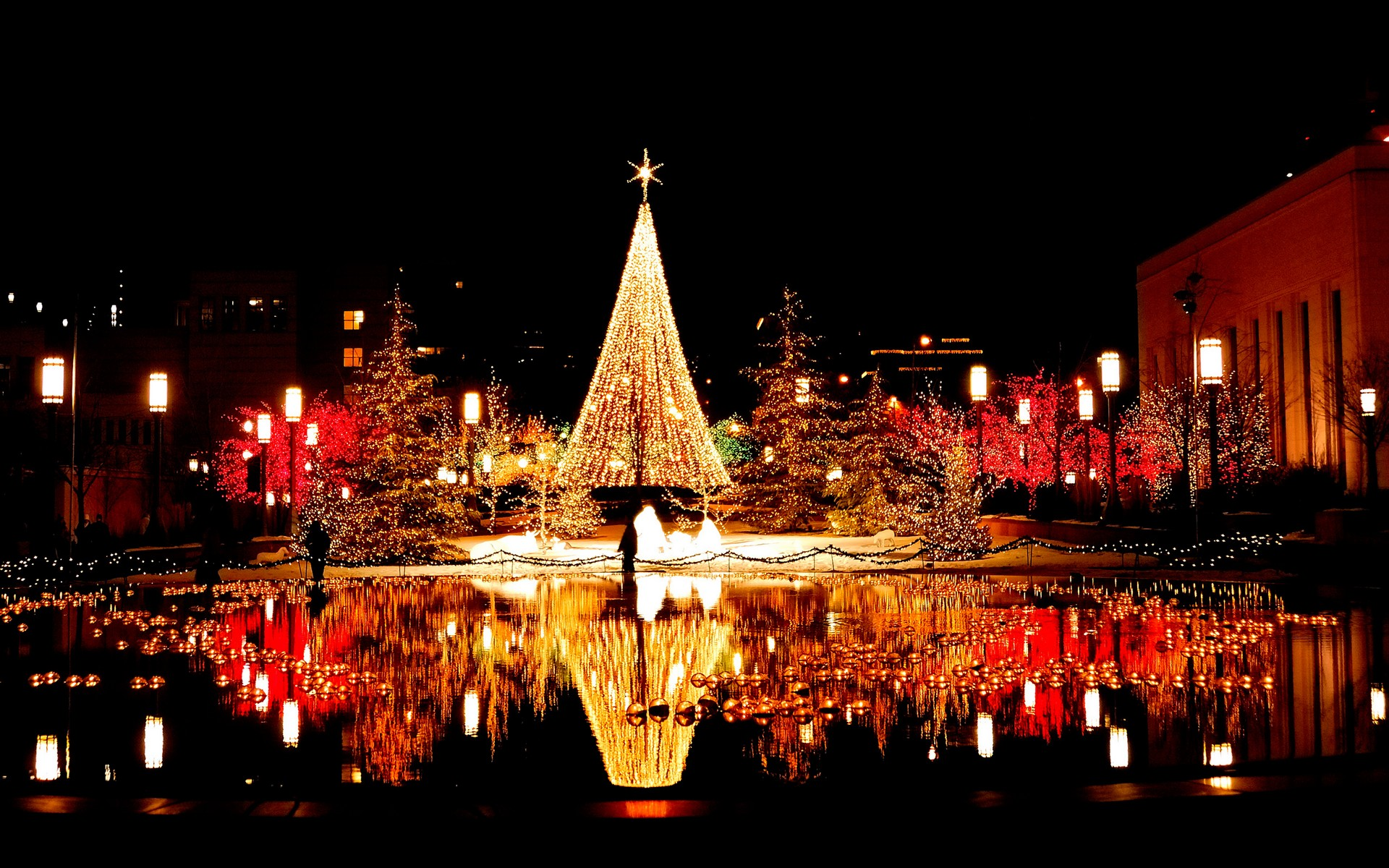 Reflection of christmas tree and trees in the phillipines