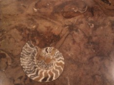 Fossils in Merzouga. I wanted to get my dad a counter made of this.