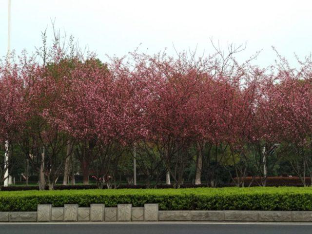 Cosa vedere a Suzhou in Cina