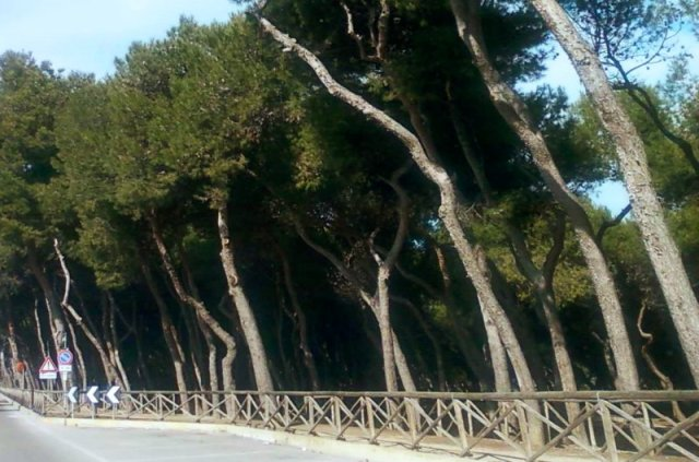 Cosa vedere a Porto Sant'Elpidio