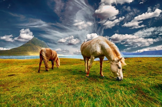 horses-2427513_960_720