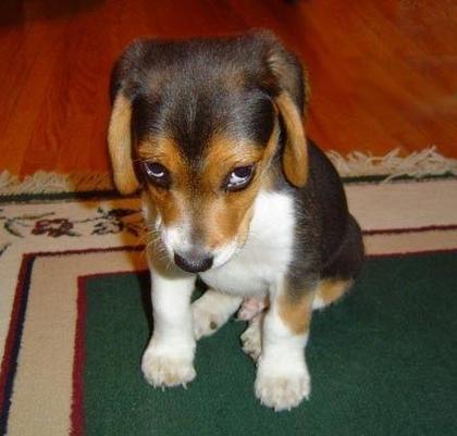 sorrydog