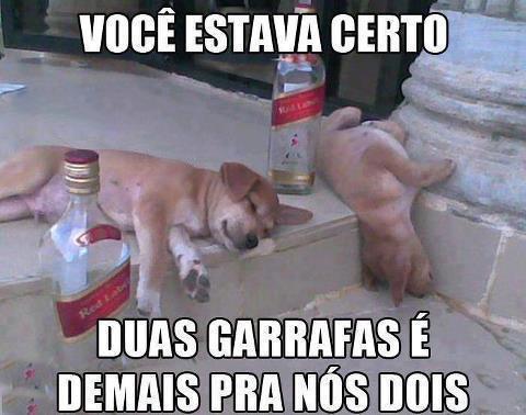 Cachorros-fofos-e-engraçados