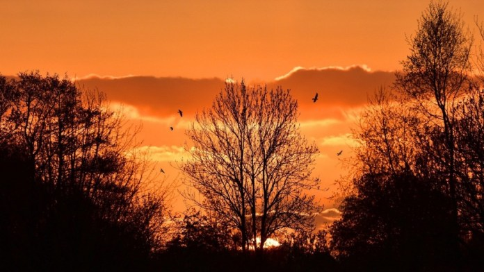Sunset Mountains Trees Landscape Nature Orange Birds Sky Red Evening Afterglow Romantic Windows Wallpaper