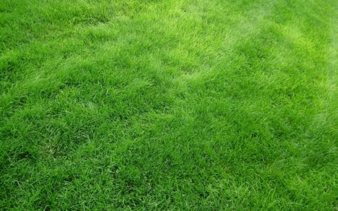 Grama-Verde2