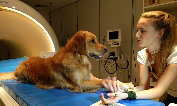 cachorro-medico