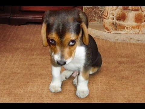 cachorro-rrependido