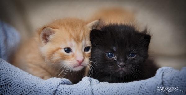 chaos-kittens-2
