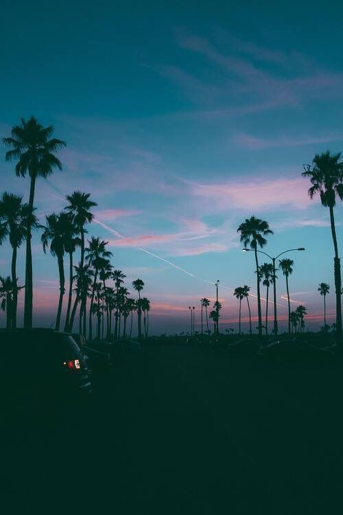 1d4e254a53a2cd840ed0d33e8ef4058c--palm-tree-background-iphone-background-iphone-tumblr