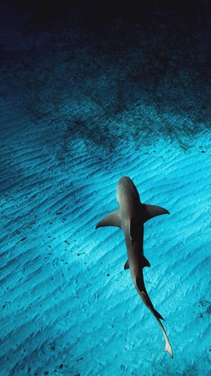 Shark-whatsapp-wallpapers-iphone-