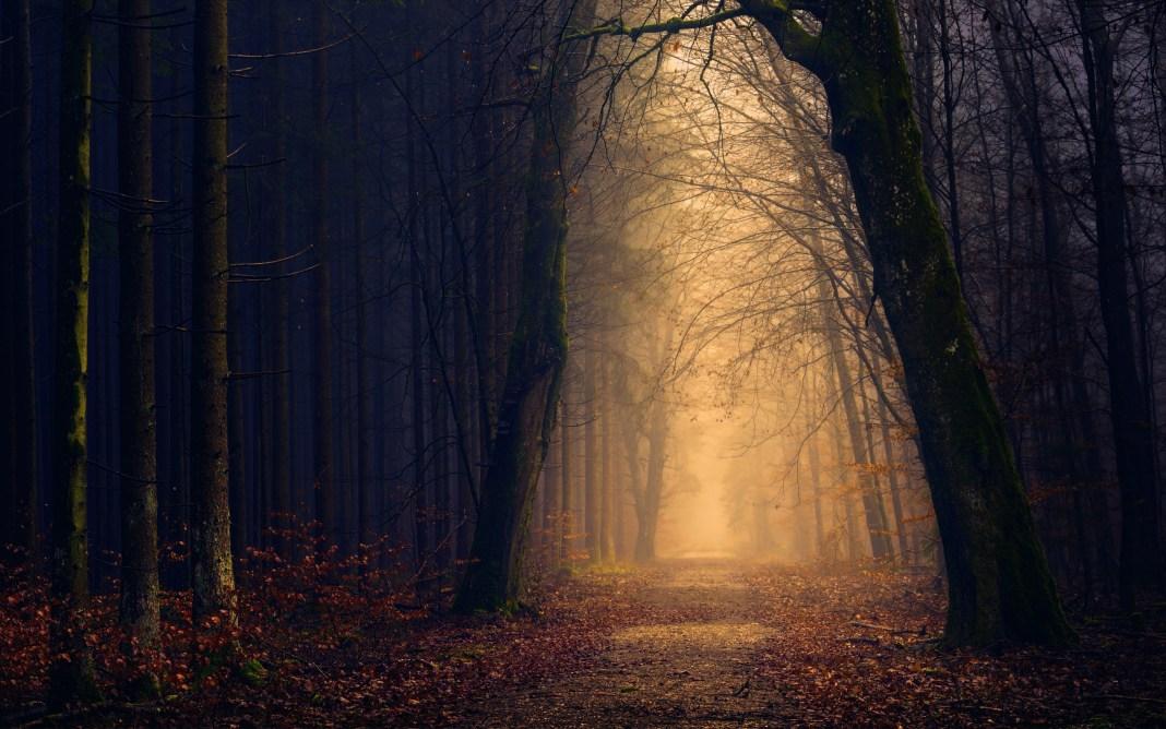 autumn_forest_5k-wide
