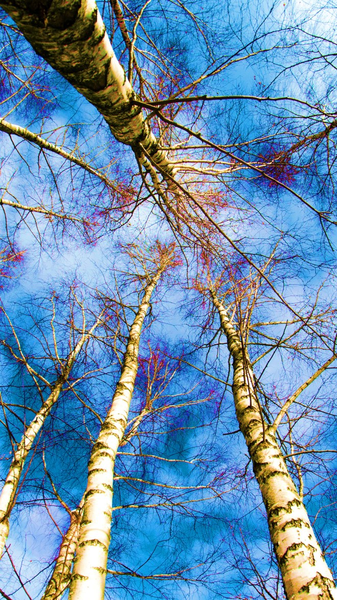 blue-trees-1147