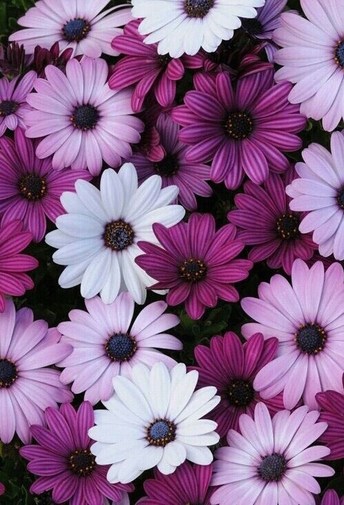 purple-flowers-wallpaper-whatsapp-wallpaper-Favim.com-4268330