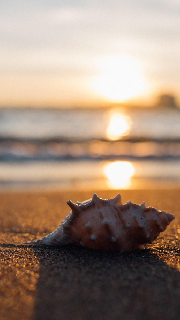 sea-shell-2224