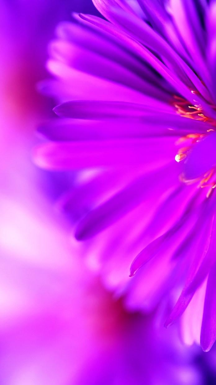 shaded-purple-4733