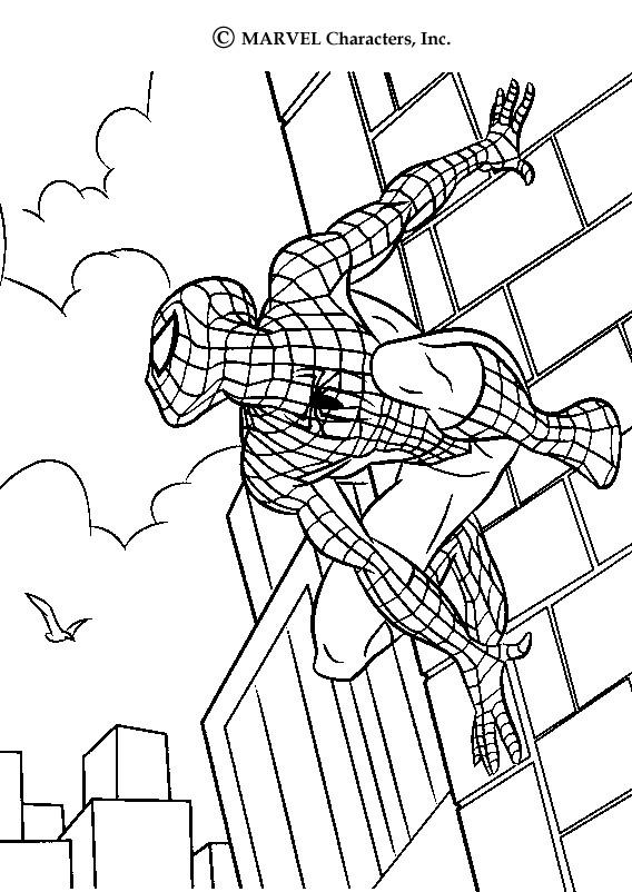 spider-source_ayk