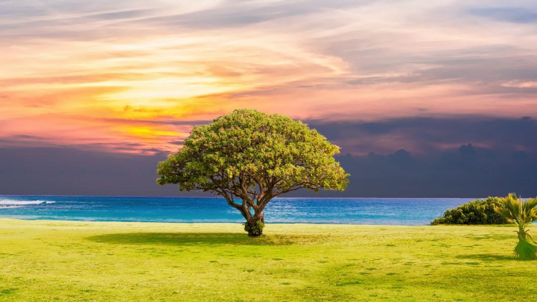 tree_grass_beach_ocean_landscape_5k-HD