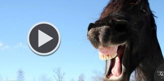 Vídeos Engraçados