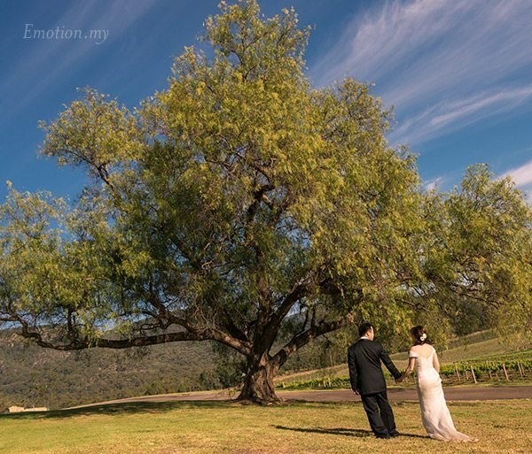 portraits-hunter-valley-australia-outdoor-tree