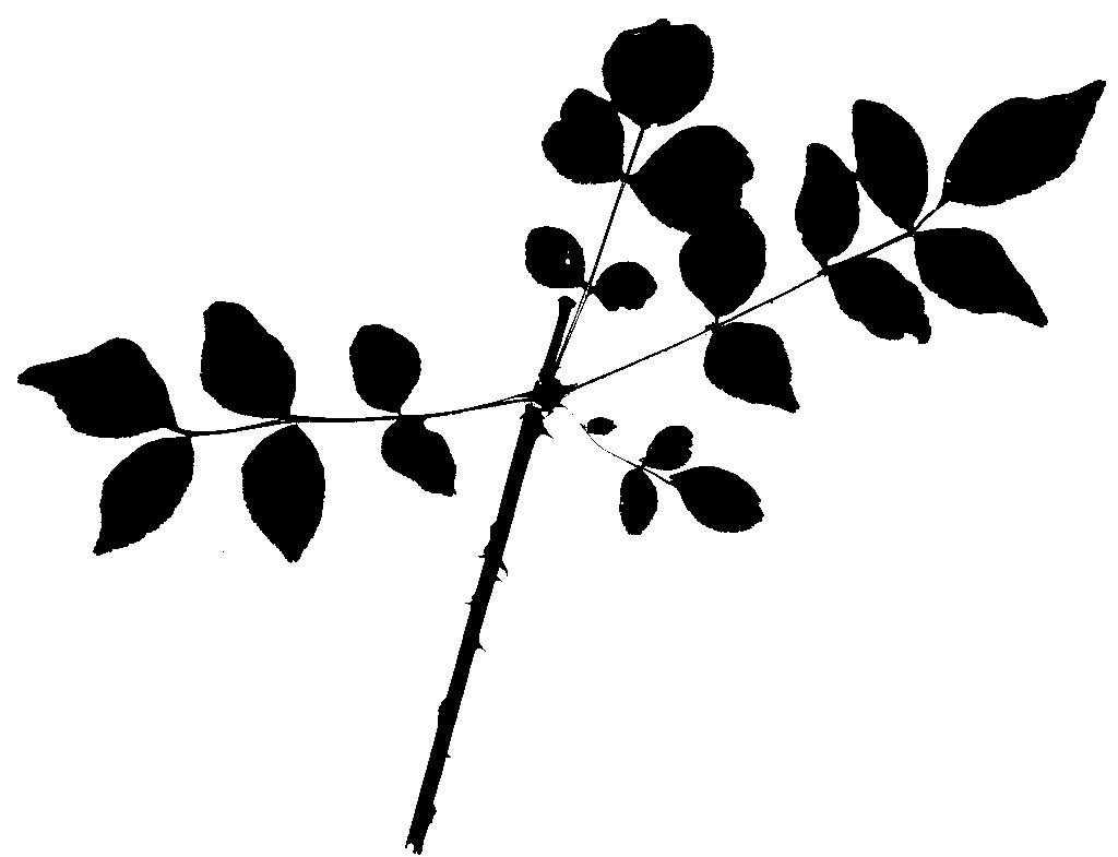 Plants Amp Human Affairs