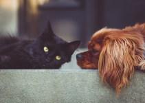 Diete specifiche per problemi di salute di cane e gatto