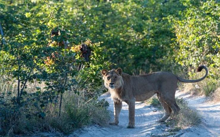 Tuludi Camp Suite Okavango Delta Botswana--