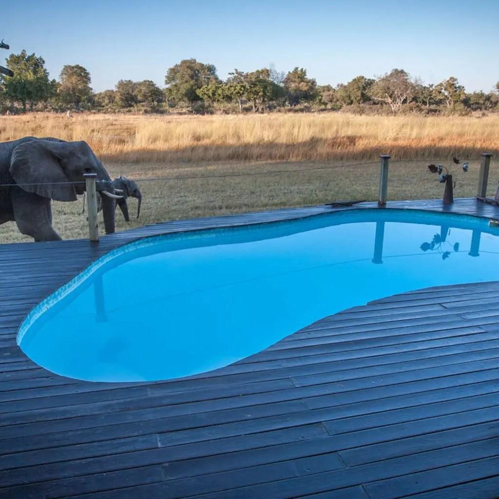 Chitabe Lediba Classic Camp Okavango Delta