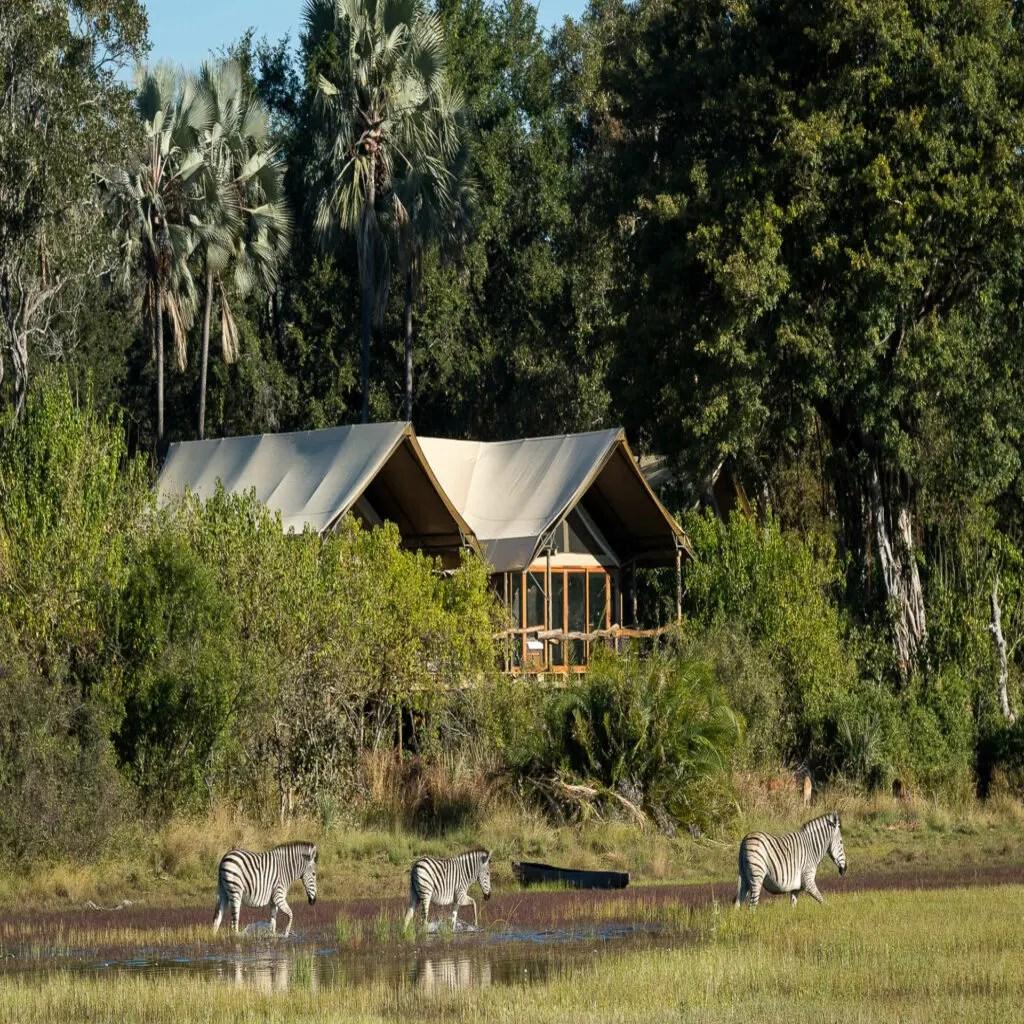 Tubu Tree Classic Camp