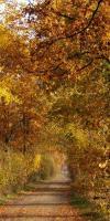 005-Herbststimmung-Im-Emsdettener-Venn-L-Klasing