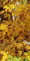 006-Herbststimmung-Im-Emsdettener-Venn-L-Klasing