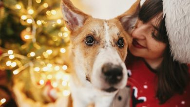 Photo of How To Choose The Perfect Holiday Gift For Dog Lovers
