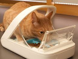 Photo of Benefits of Automatic food feeders for cats