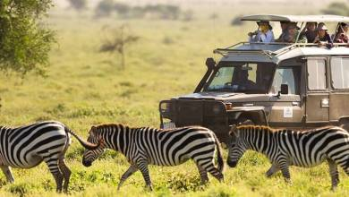 Photo of What Should You See In Your Kenya And Tanzania Safaris Tours?