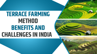 Photo of Terrace Farming Method – Benefits and Challenges in India