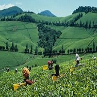 Photo of Best Top 9 Destinations for Tea Sommeliers