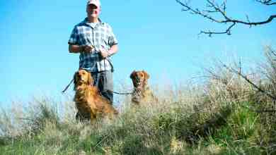 """Photo of """"PETER HARGREAVES DOG TRAINER – TYPES OF AGGRESSION IN PET DOGS"""""""