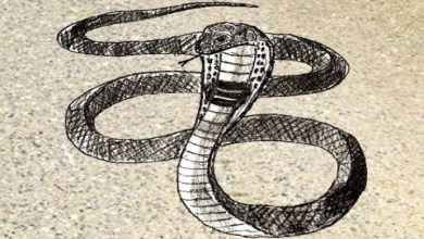 Photo of How easy and beautiful to draw a snake in stages