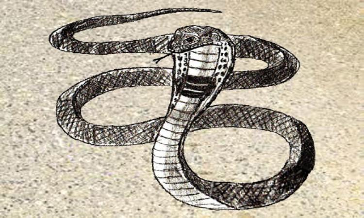 draw a snake