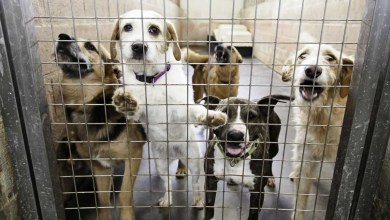 Photo of Total Information That You Must Know About Dogs at the Animal Shelter