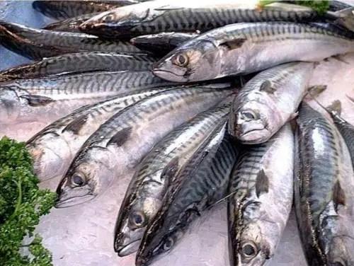 Beneficios que tiene comer mariscos y pescados