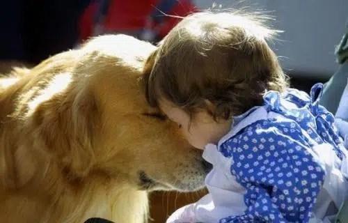 Cuando el niño quiere una mascota