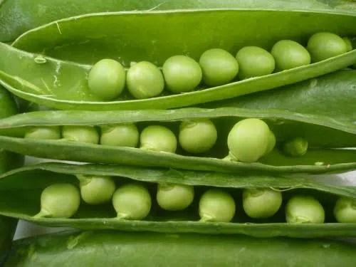 Descubre cuales son los mejores alimentos para nuestra salud. Parte III