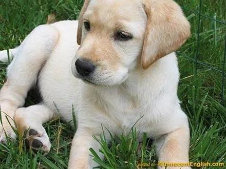 Elección de un cachorro, el compañero ideal