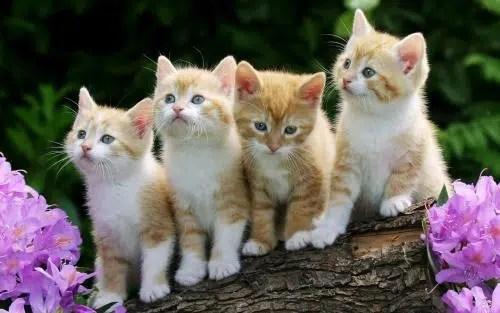 La alimentación de nuestros gatos
