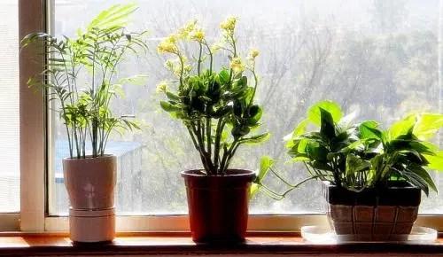Operación primavera para tus plantas