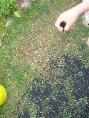 芝生保護ゴムチップ材を撒く