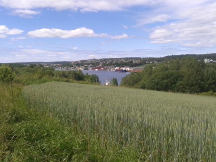 Champs sur les hauteurs de Fredrikstad